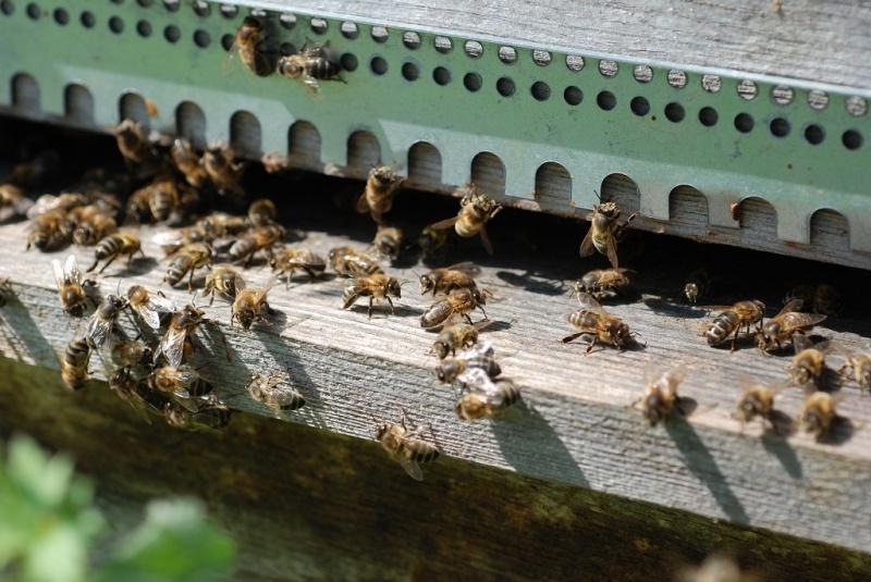 2020-04-11-EmR-abeilles01-1024x685