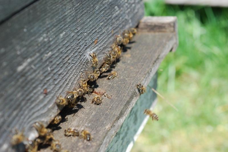 2020-04-12-EmR-abeilles-1024x685